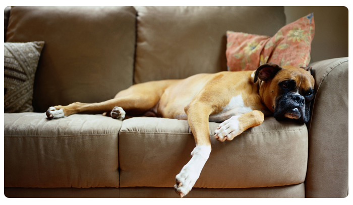 Проверенный способ удалить пятна с дивана