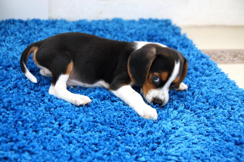 Купили собаку – купите HG